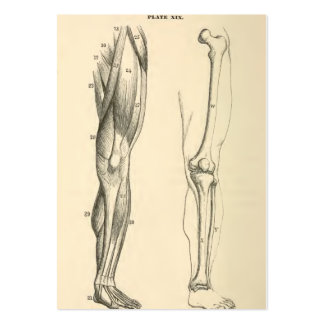 essay on bones and muscles