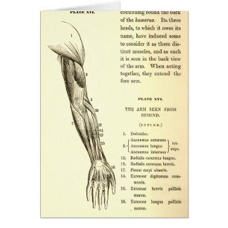Vintage Anatomy | Muscles of the Arm  (circa 1852) Greeting Card