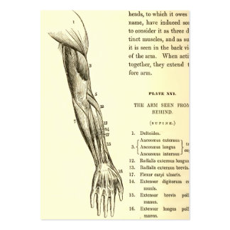 Vintage Anatomy | Muscles of the Arm  (circa 1852) Large Business Card