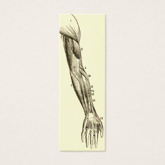 Vintage Anatomy | Muscles of the Arm  (circa 1852) Mini Business Card
