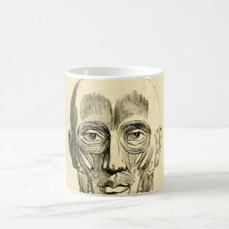 Vintage Anatomy | Muscles of the Face (circa 1852) Coffee Mug