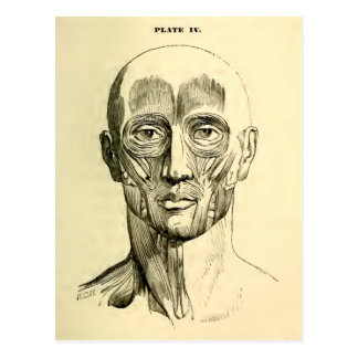 Vintage Anatomy | Muscles of the Face (circa 1852) Postcard