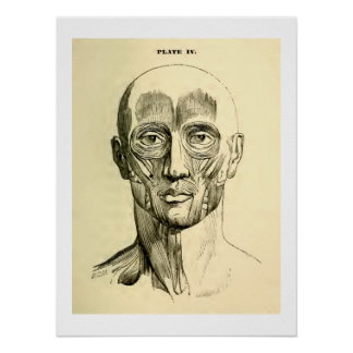 Vintage Anatomy | Muscles of the Face (circa 1852) Poster