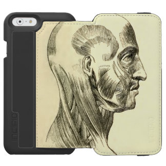 Vintage Anatomy | Muscles of the Head (circa 1852) iPhone 6/6s Wallet Case
