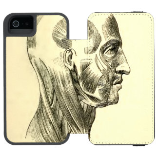 Vintage Anatomy | Muscles of the Head (circa 1852) iPhone SE/5/5s Wallet Case