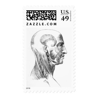 Vintage Anatomy | Muscles of the head (circa 1852) Stamp