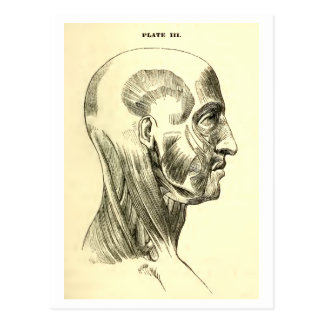 Vintage Anatomy | Muscles of the Head (circa 1852) Postcard