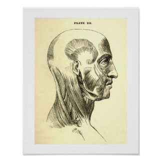 Vintage Anatomy | Muscles of the Head (circa 1852) Poster