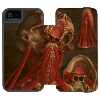 Vintage Anatomy | Neck and Face iPhone SE/5/5s Wallet Case
