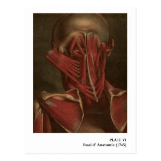 Vintage Anatomy | Neck and Shoulders Postcard