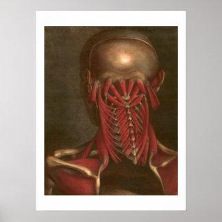 Vintage Anatomy | Neck and Shoulders Poster