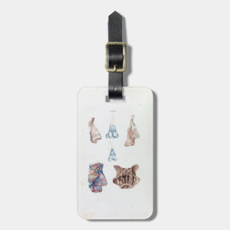 Vintage Anatomy of the Human Nose and Sinuses Bag Tag