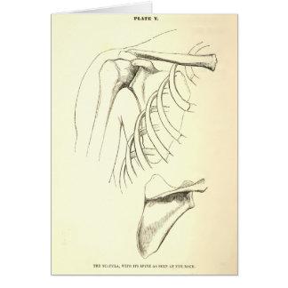 Vintage Anatomy | Scapula (circa 1852) Greeting Card