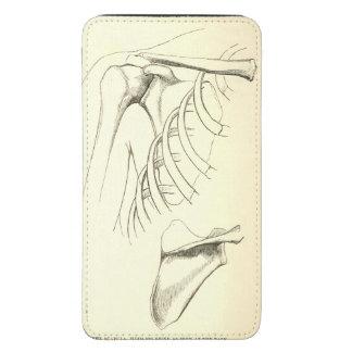Vintage Anatomy | Scapula (circa 1852)