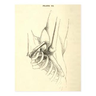 Vintage Anatomy | Shoulder Joint (circa 1852) Postcard