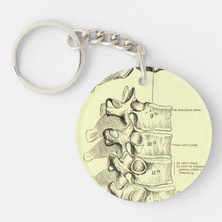 Vintage Anatomy   Vertebrae Keychains