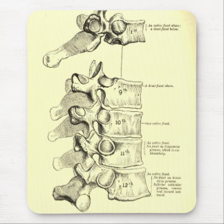 Vintage Anatomy | Vertebrae Mouse Pad