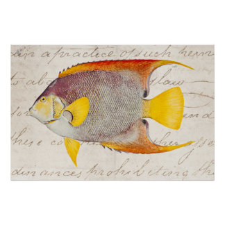 Vintage Angel Fish Antique Hawaiian Print Template