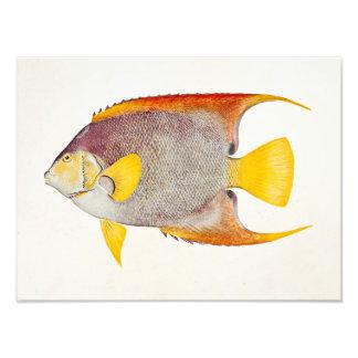 Vintage Angel Fish Antique Hawaiian Print Template Photo Print