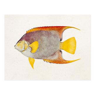 Vintage Angel Fish Antique Hawaiian Print Template Postcard