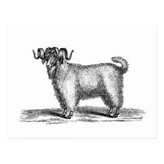 Vintage Angora Goat Illustration -1800's Goats Postcard