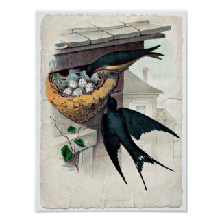 Vintage Antique Barn Swallow Pair Poster