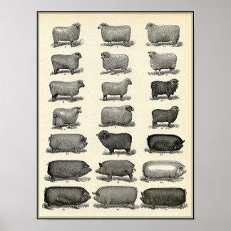 Vintage Antique Farm Animals Poster