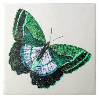 Vintage Antique Green Butterfly 1800s Illustration Tile