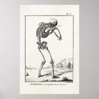 Vintage Antique Human Skeleton Medical Anatomy Poster