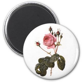 Vintage Antique Pink Garden Roses in Bloom 2 Inch Round Magnet