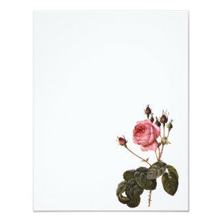 Vintage Antique Pink Garden Roses in Bloom Card