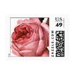 Vintage Antique Pink Garden Roses in Bloom Postage Stamps