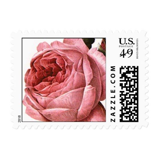 Vintage Antique Pink Garden Roses in Bloom Postage