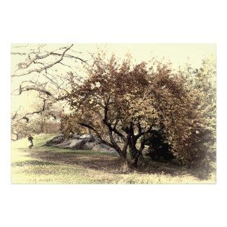 Vintage Antiqued Landscape Photo of Central Park