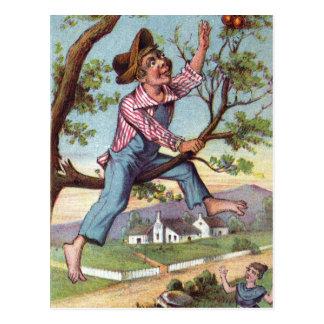 Vintage Apple Picking Postcard