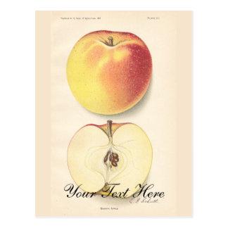 Vintage Apple Postcard