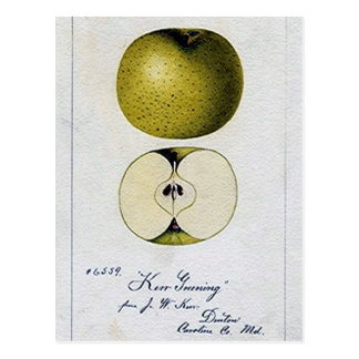 Vintage Apple Recipe Card