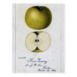 Vintage Apple Recipe Card Postcard