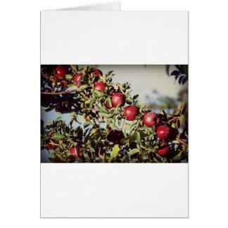 Vintage Apple Tree Card