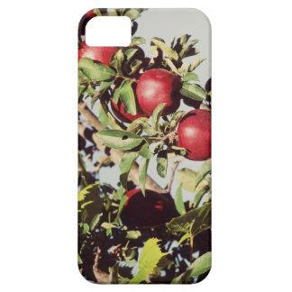 Vintage Apple Tree iPhone 5 Case