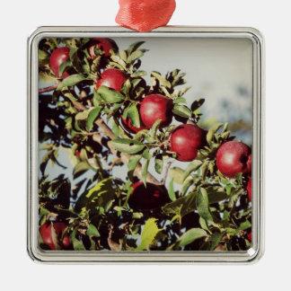 Vintage Apple Tree Christmas Tree Ornament