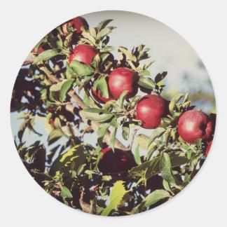Vintage Apple Tree Sticker