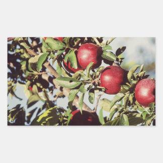 Vintage Apple Tree Rectangle Sticker