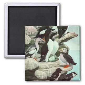 Vintage Aquatic Birds Puffins, Marine Life Animals 2 Inch Square Magnet