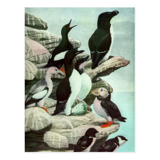 Vintage Aquatic Birds Puffins, Marine Life Animals Postcard