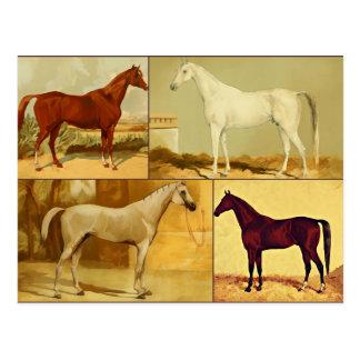 Vintage  Arabian horses - collage Postcard