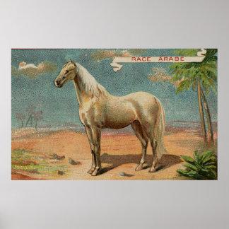 Vintage Arabian White Horse Poster