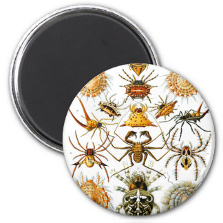 Vintage Arachnida Spiders Old Illustration Magnets