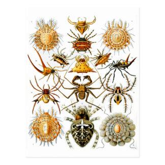Vintage Arachnida Spiders Old Illustration Postcard