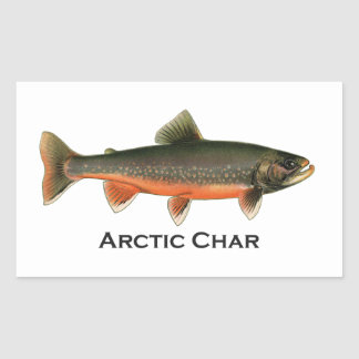 Vintage Arctic Char Illustration - Breeding Male Rectangular Sticker